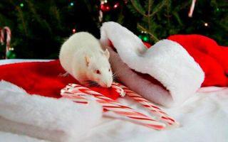 Талисманы и символ 2020 года Белой Крысы — свой амулет найдет каждый