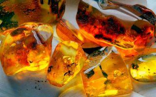 ТОП 12 способов отличить настоящий янтарь от подделки — свой найдет каждый