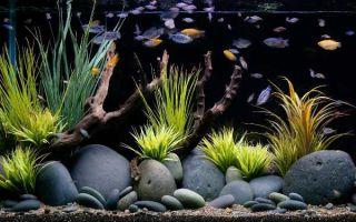 Какие камни можно класть в аквариум и что лучше выбрать: виды, подготовка, проблемы