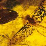Стрекоза в янтаре